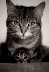 RoyaltyCats-Mother&Baby!